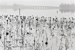 René Burri - Former Summer Palace, Dead Lotus Flowers on the Kunming Lake, Beijing, China, 1964 © René Burri/ Magnum Photos Courtesy ATLAS Gallery