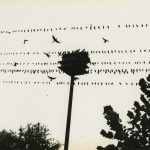 Birds on Wire © Michael Hoppen Gallery All Rights Reserved