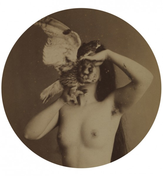 Nude Zoomoprhic - 1870s © Michael Hoppen Gallery All Right Reserved