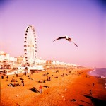 Ben Smart - Brighton Beach Seagull. Shot with a Seagull 4a - Fuji Velvia 120 - Brighton Beach