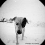 Erica Babini - My lovely dog - Lomography Lady Grey 400 - Russi (RA) - Italy