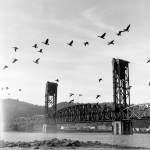 John Carleton - Geese On The Wing -  Neopan Acros - Portland, Oregon, USA
