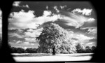 Name Adam Powell  Title Invisible Light #2  Film used Rollei Infrared 400S 35mm  Location Greenwich Park, London
