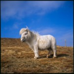 Name Osian Rees  Title Pony on Moel Eilio  Film used Velvia 50  Location Snowdonia, Wales