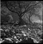 Name Ramon Isleta  Title Wawa Dam Tree  Film used Fuji Acros 100  Location Philippines