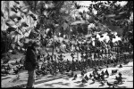 Name Salvo Toscano  Title boy with birds  Film used Kodak 125px  Location Istanbul