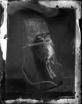 Name Tim Pearse  Title The Long and the Short of it  Film used Wet Collodion Ambrotype  Location Studio, Kilve, Somerset, UK