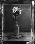 Name Tim Pearse  Title Untitled Floral Composition One  Film used Wet Collodion Ambrotype  Location Studio, Kilve, Somerset, UK