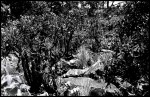 Name fernando lacerda silva oliveira  Title 02  Film used kodak - trix  Location parque nacional da serra da canastra - sacramento - brazil