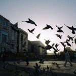 fariz hilman perdana - Birds - Kodak Colorpluas 200 - medina, Kingdom Of Saudi Arabia