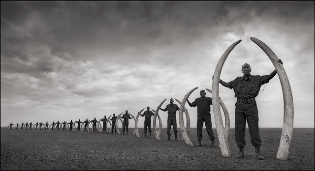 Nick Brandt - Line of Rangers with Tusks of Elephant Killed at the Hands of Man, Amboseli, 2011 - © Nick Brandt
