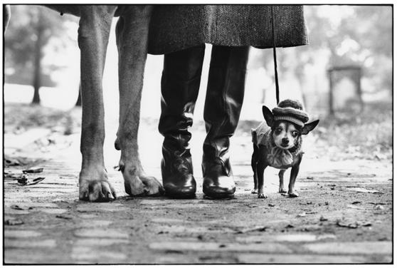 Elliott Erwitt - Copyright ©Elliott Erwitt/Magnum Photos