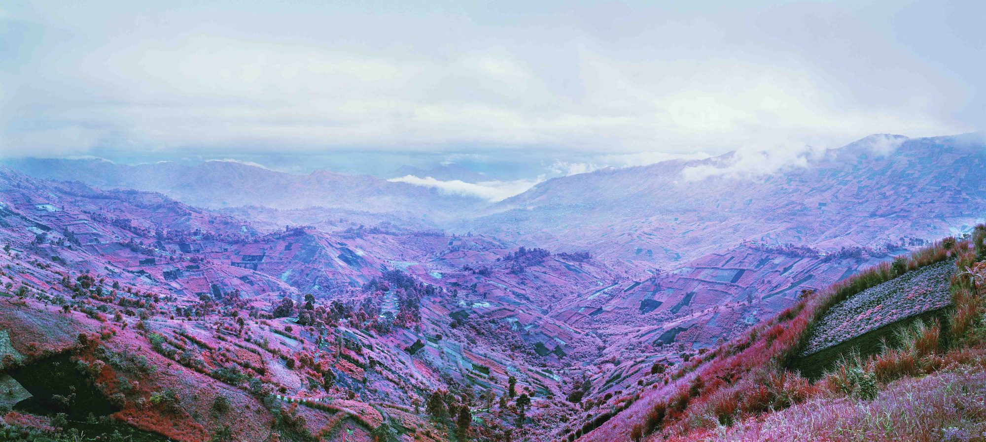 Richard Mosse - Because the Night, 2012, C-print, 54 x 114 in. (137.2 x 289.6 cm.), Edition of 5 +1AP © Richard Mosse
