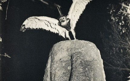 Cercophitecus Icarocornu from the Fauna series by Joan Fontcuberta and Pere Formiguera 1987 © Joan Fontcuberta and Pere Formiguera.