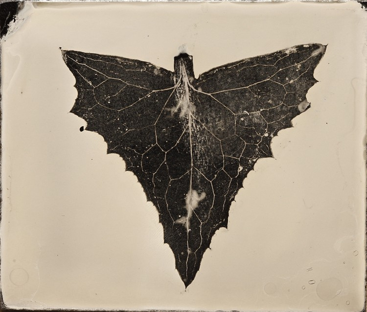Wet Plate Photograms - Anton Orlov Leaf_Arrow_6th_Ambrotype-750x637 Technique